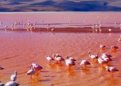 SALT FLATS Premium Tour – 3 days / 2 nights